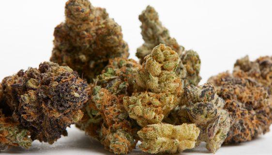 CBD Flower strains